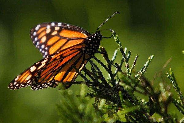 Reuters mariposa flor